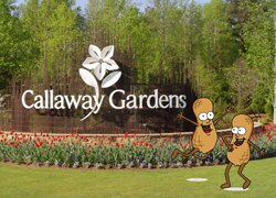 New location for southern peanut growers agwired for Callaway gardens treetop adventure