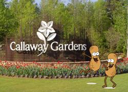 callaway-pnuts